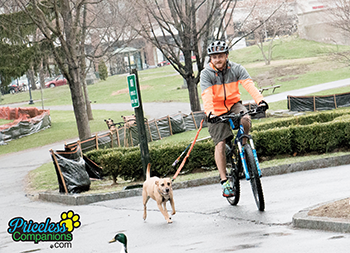 dog walking, biking with dogs, priceless companions, pet services
