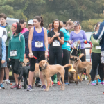 dash for the dog park, dog park, saratoga dog park, dog park 12866